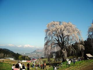 水中のしだれ桜から北信五岳を望む